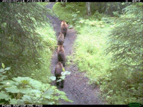 4 bears.jpg