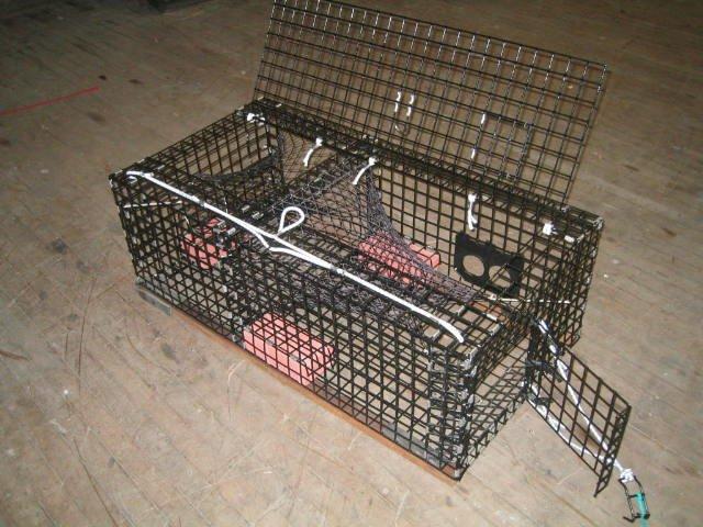 seabass trap.jpg